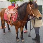 horse-hire